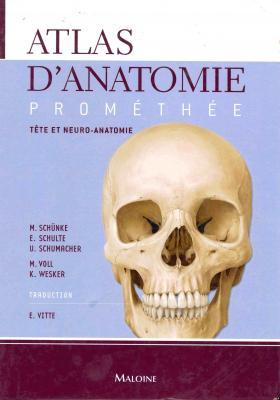 Tête et neuro-anatomie
